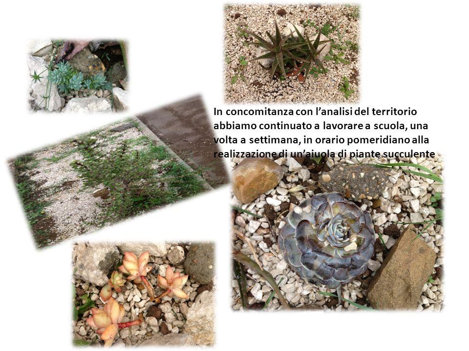 In concomitanza con l'analisi del territorio abbiamo continuato a lavorare a scuola, una volta a settimana, in orario pomeridiano alla realizzazione di un'aiuola di piante succulente