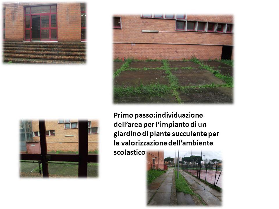 Primo passo:individuazione dell'area per l'impianto di un giardino di piante succulente per la valorizzazione dell'ambiente scolastico