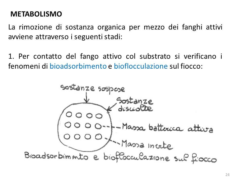 METABOLISMO La rimozione di sostanza organica per mezzo dei fanghi attivi avviene attraverso i seguenti stadi: