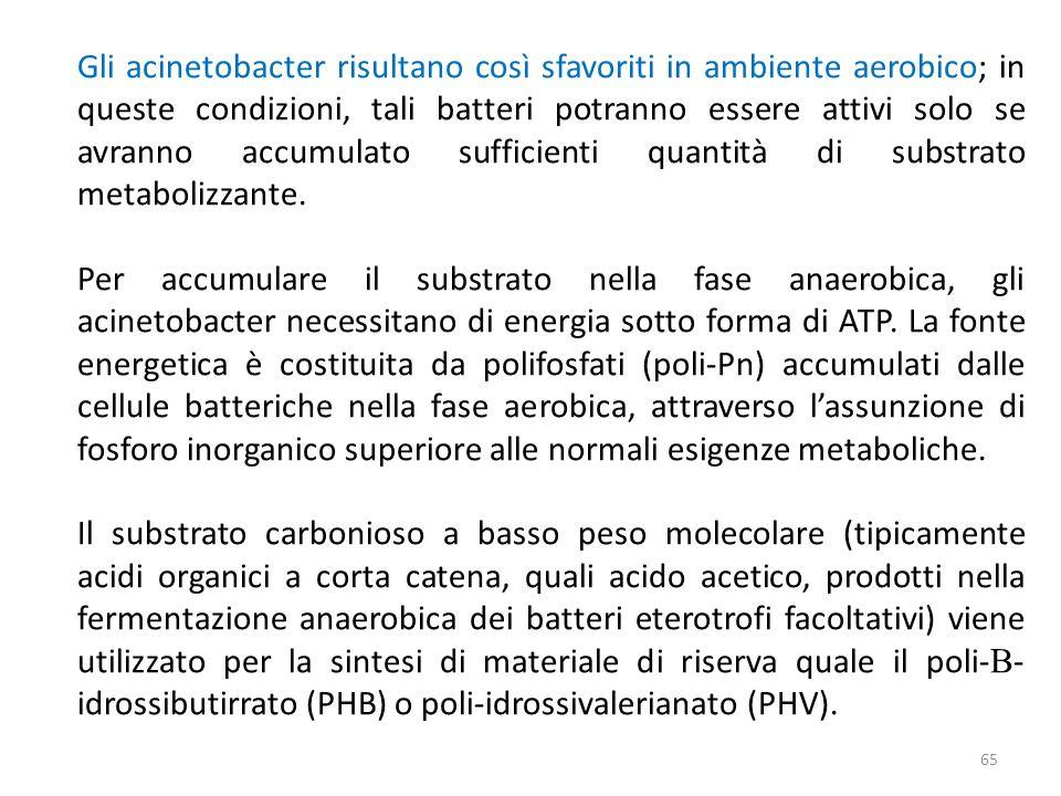 Gli acinetobacter risultano così sfavoriti in ambiente aerobico; in queste condizioni, tali batteri potranno essere attivi solo se avranno accumulato sufficienti quantità di substrato metabolizzante.