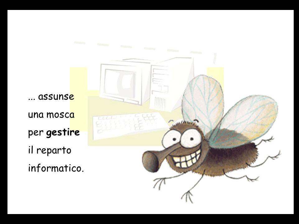 ... assunse una mosca per gestire il reparto informatico.