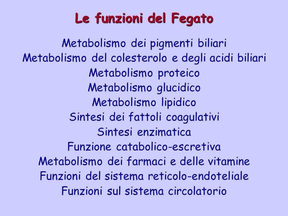 Le funzioni del Fegato Metabolismo dei pigmenti biliari