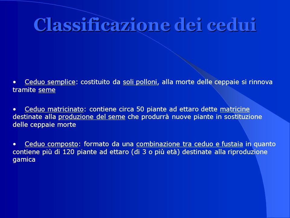 Classificazione dei cedui