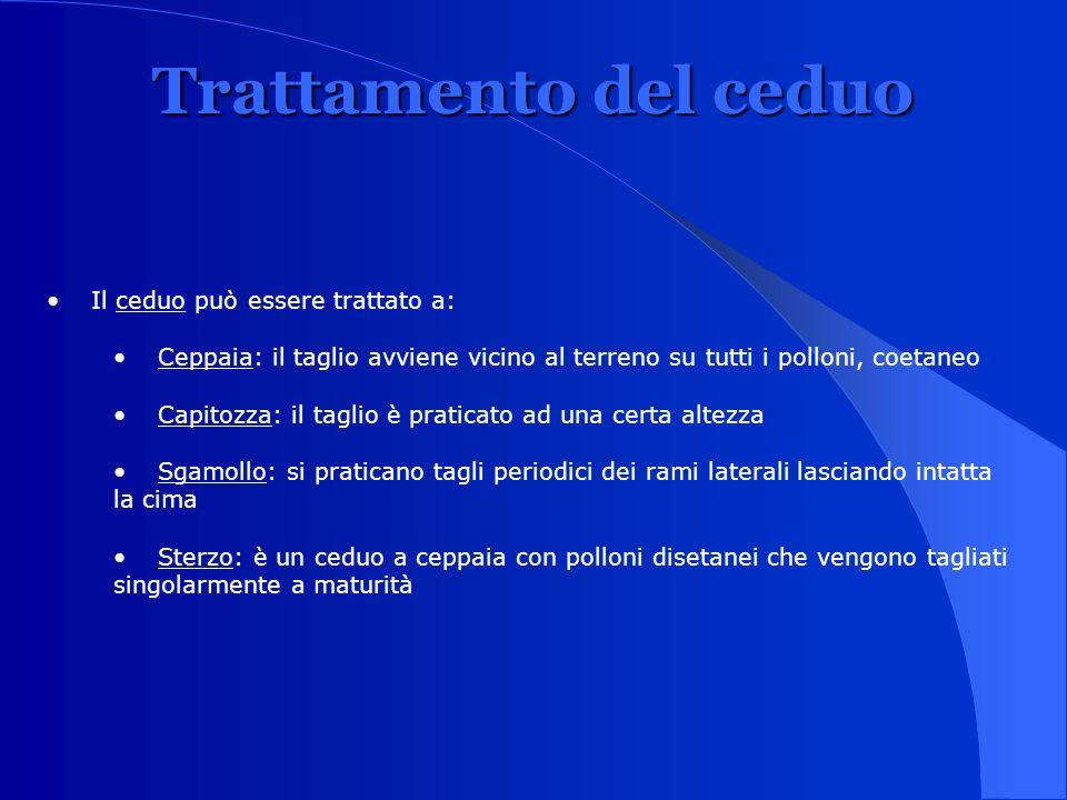 Trattamento del ceduo Il ceduo può essere trattato a:
