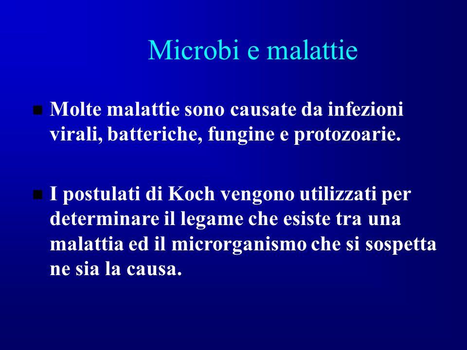 Microbi e malattie Molte malattie sono causate da infezioni virali, batteriche, fungine e protozoarie.