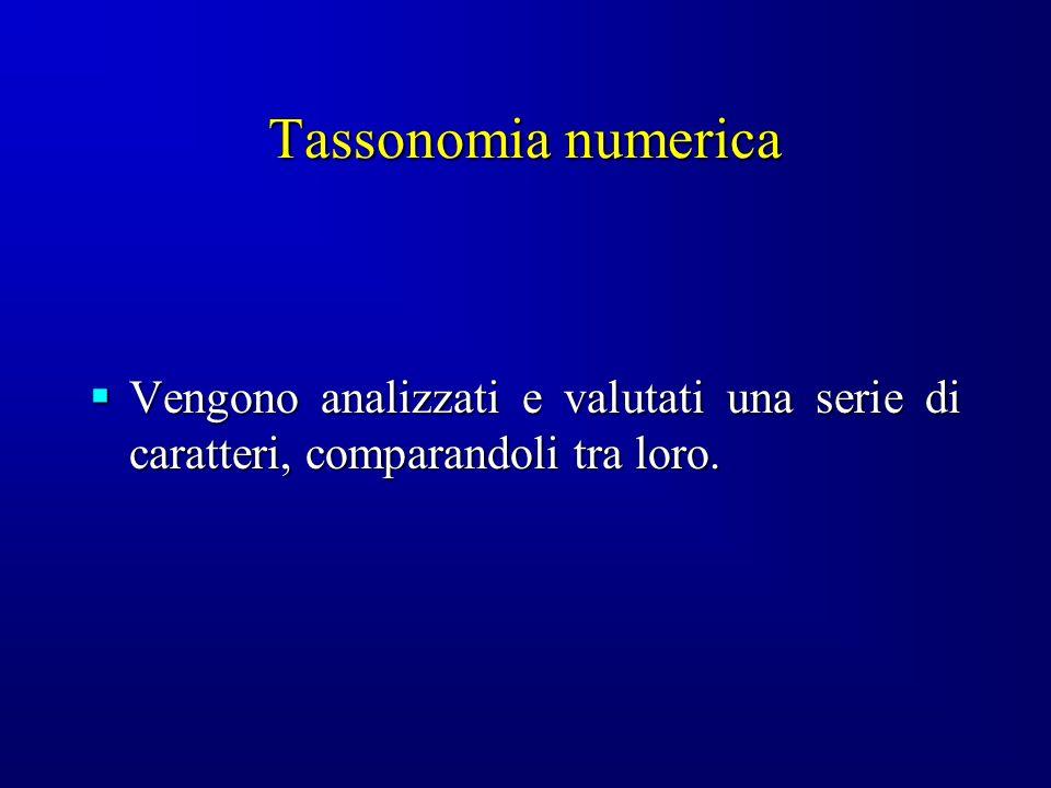 Tassonomia numerica Vengono analizzati e valutati una serie di caratteri, comparandoli tra loro.