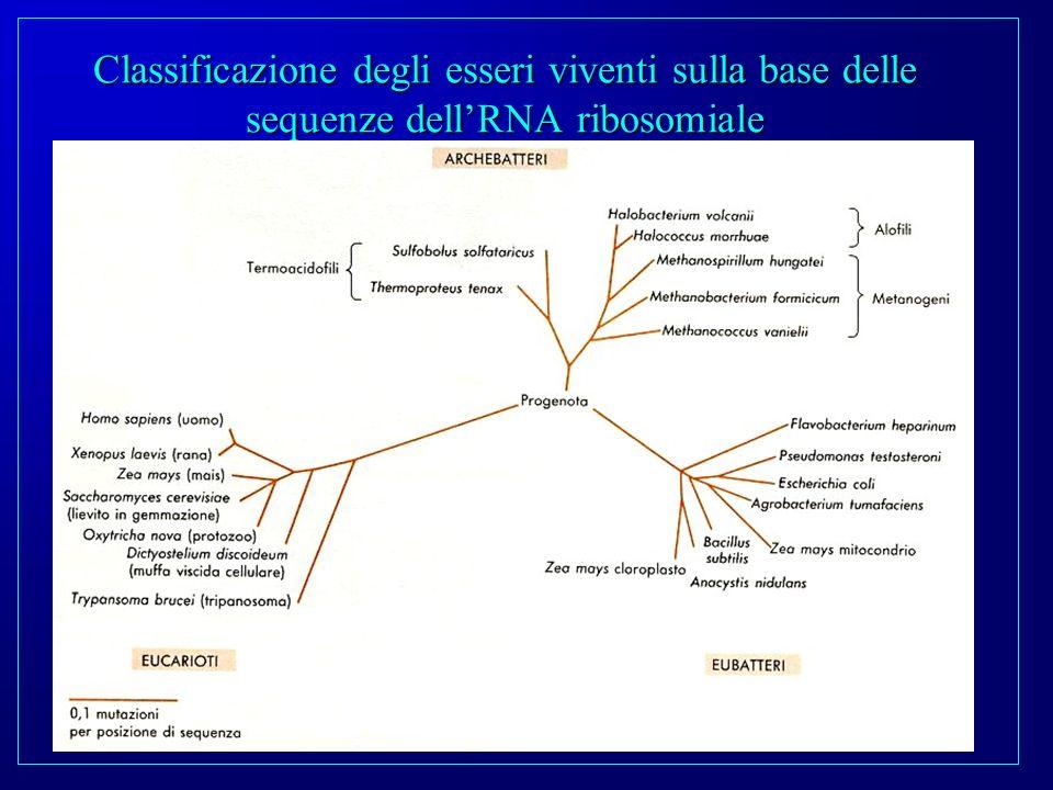 Classificazione degli esseri viventi sulla base delle sequenze dell'RNA ribosomiale