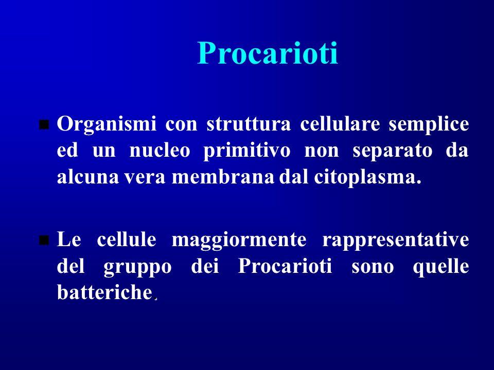 Procarioti Organismi con struttura cellulare semplice ed un nucleo primitivo non separato da alcuna vera membrana dal citoplasma.
