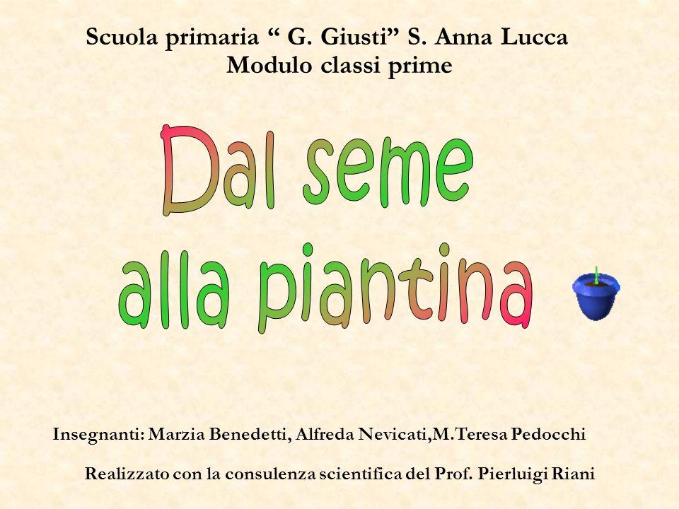 Dal seme alla piantina Scuola primaria G. Giusti S. Anna Lucca