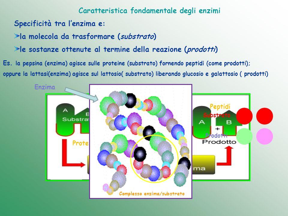 Caratteristica fondamentale degli enzimi