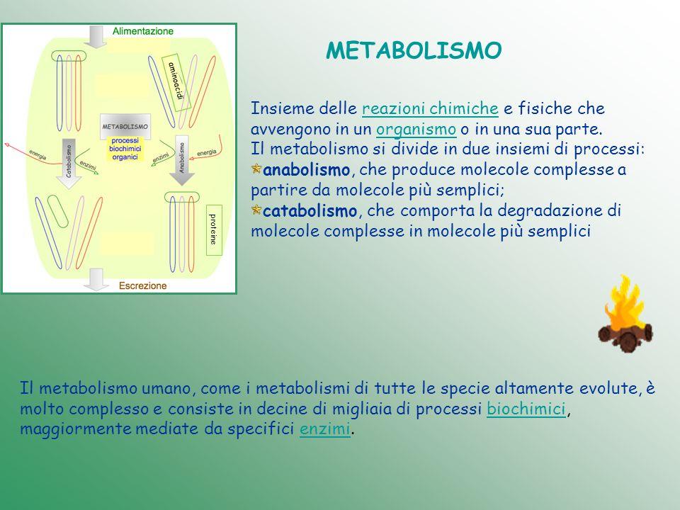METABOLISMO aminoacidi. Insieme delle reazioni chimiche e fisiche che avvengono in un organismo o in una sua parte.
