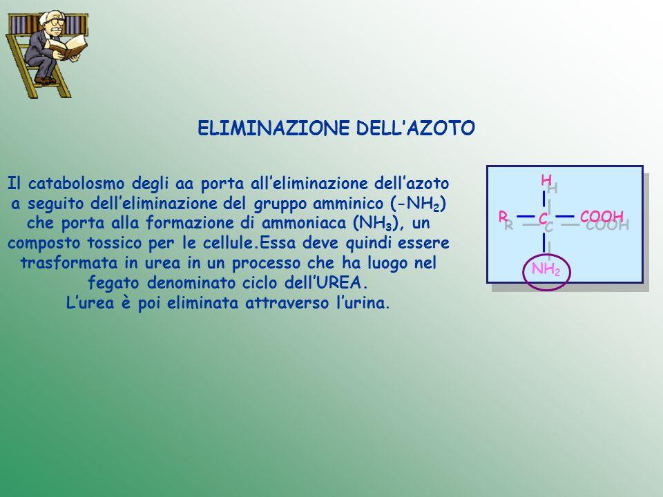 ELIMINAZIONE DELL'AZOTO