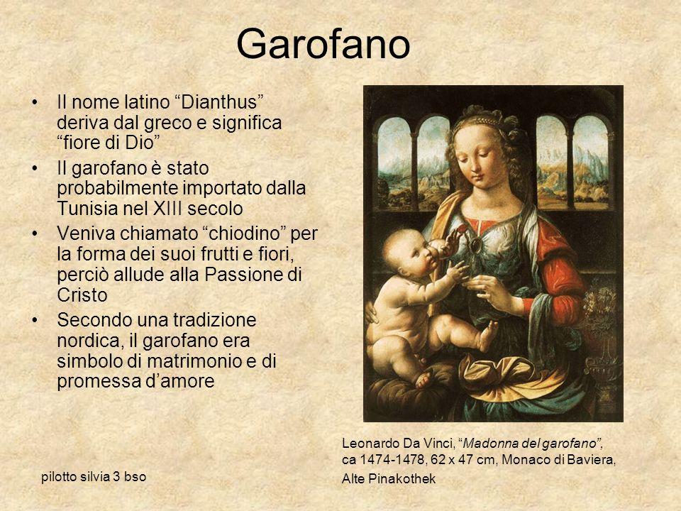 Garofano Il nome latino Dianthus deriva dal greco e significa fiore di Dio