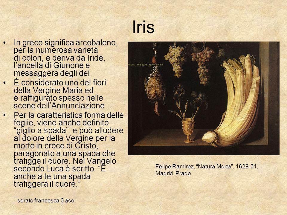 Iris In greco significa arcobaleno, per la numerosa varietà di colori, e deriva da Iride, l'ancella di Giunone e messaggera degli dei.