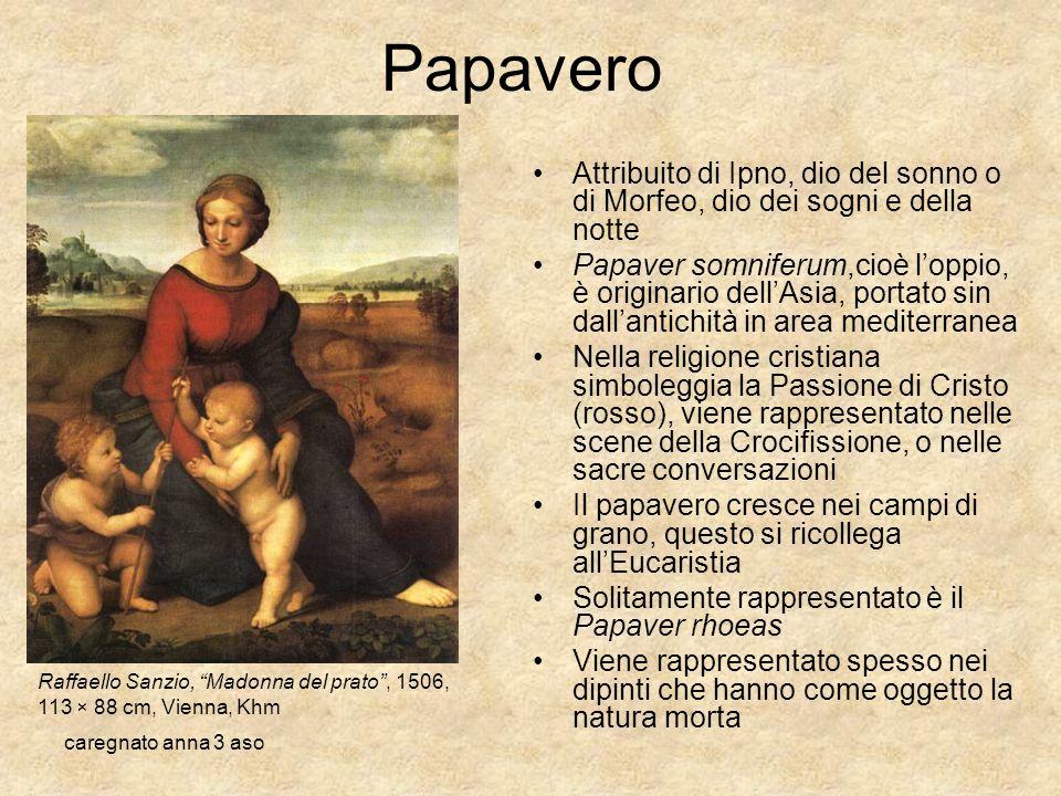 Papavero Attribuito di Ipno, dio del sonno o di Morfeo, dio dei sogni e della notte.