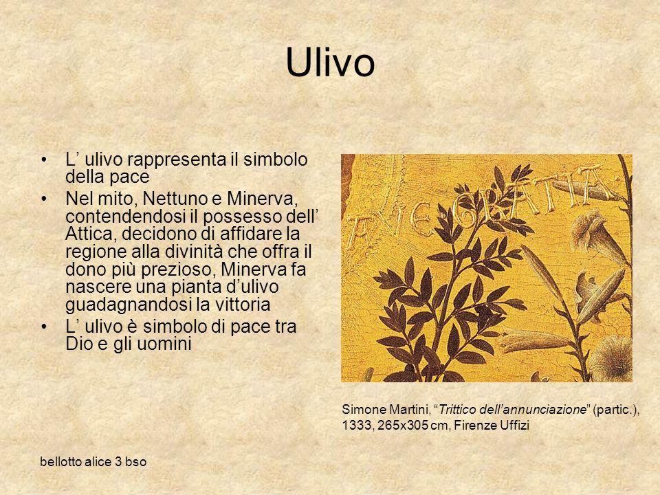Ulivo L' ulivo rappresenta il simbolo della pace