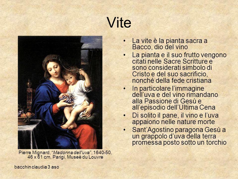 Vite La vite è la pianta sacra a Bacco, dio del vino