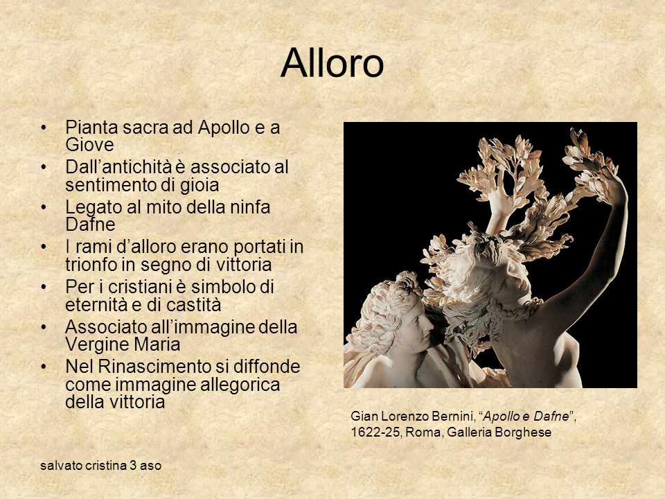 Alloro Pianta sacra ad Apollo e a Giove