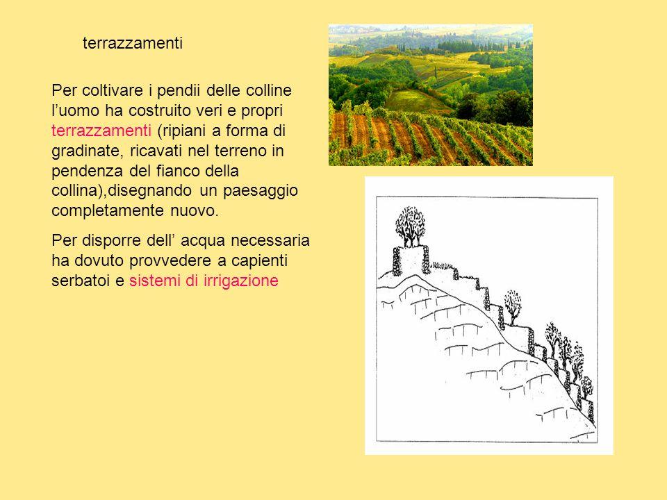 """La collina Classe 3°A Scuola Primaria """"AVGentile"""" - ppt video ..."""
