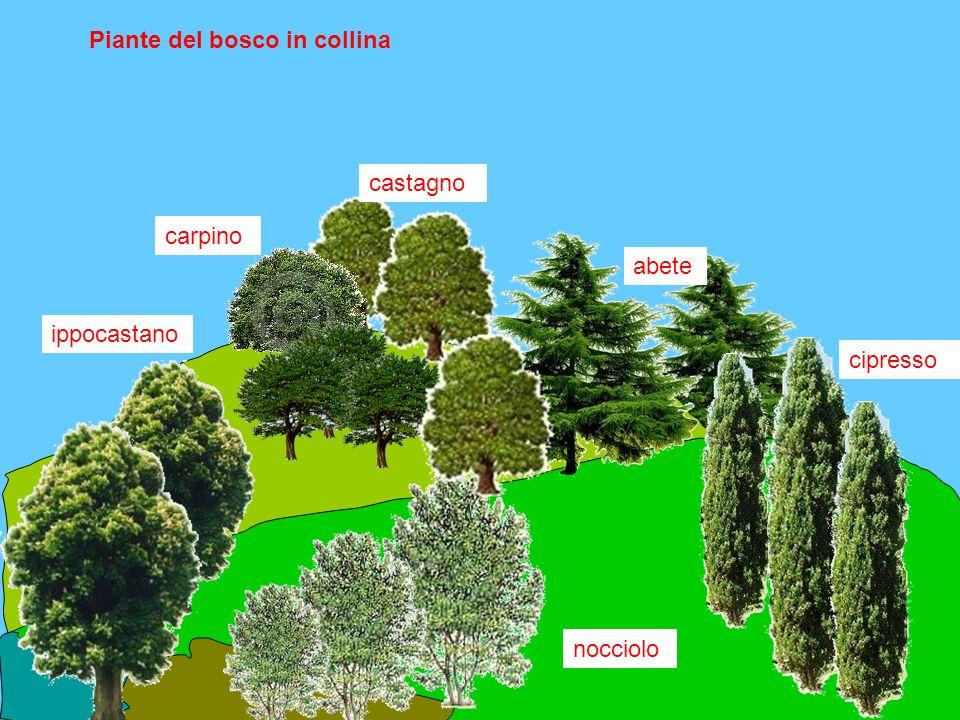 Piante del bosco in collina