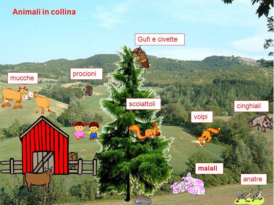 Animali in collina Gufi e civette procioni mucche scoiattoli cinghiali