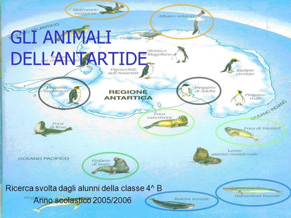GLI ANIMALI DELL'ANTARTIDE