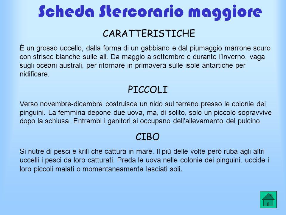 Scheda Stercorario maggiore
