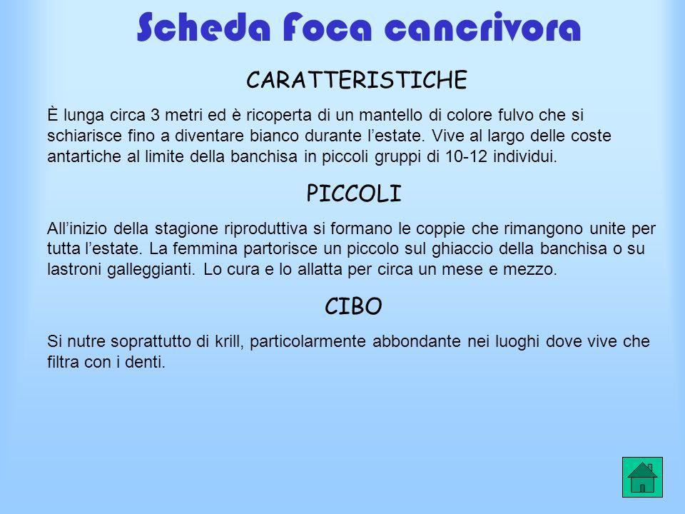 Scheda Foca cancrivora