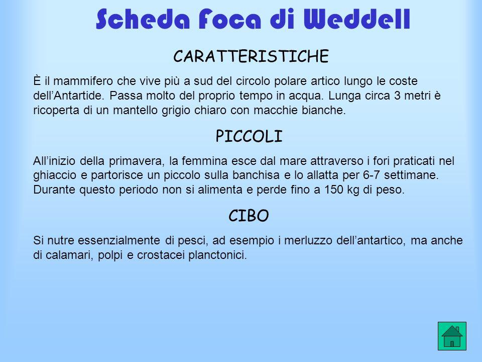 Scheda Foca di Weddell CARATTERISTICHE PICCOLI CIBO
