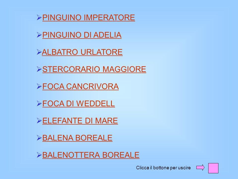PINGUINO IMPERATORE PINGUINO DI ADELIA ALBATRO URLATORE