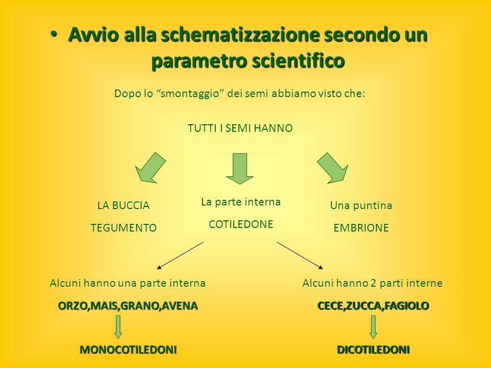 Avvio alla schematizzazione secondo un parametro scientifico