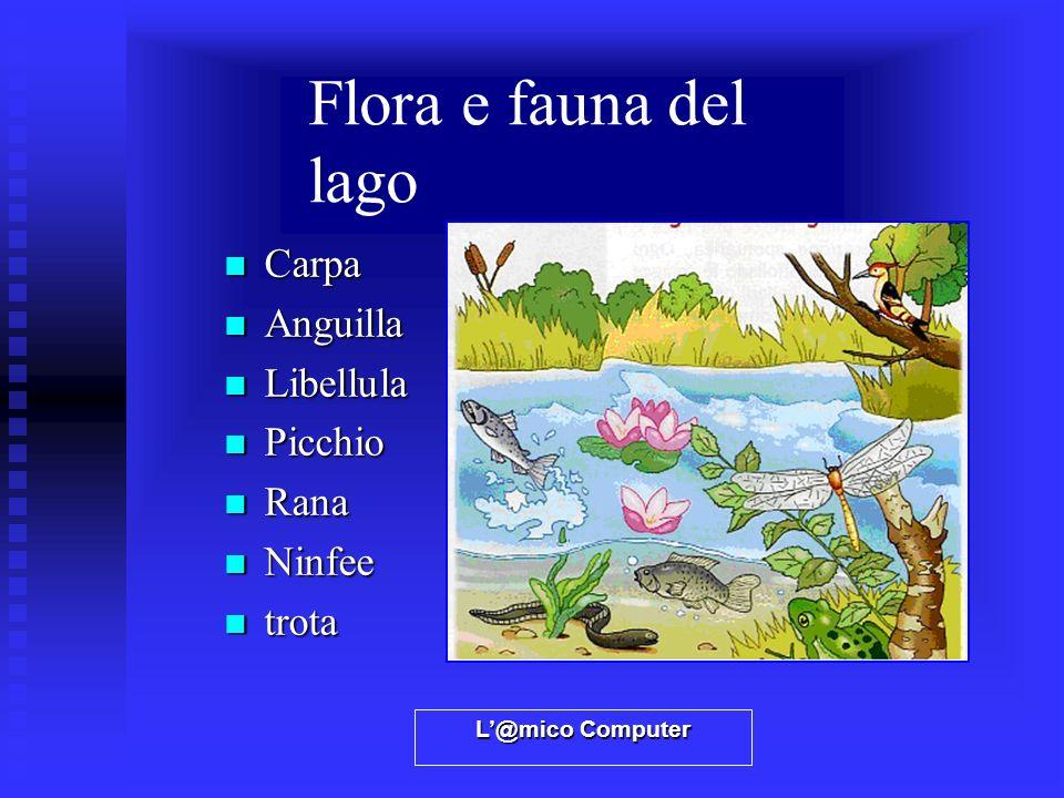 Flora e fauna del lago Carpa Anguilla Libellula Picchio Rana Ninfee