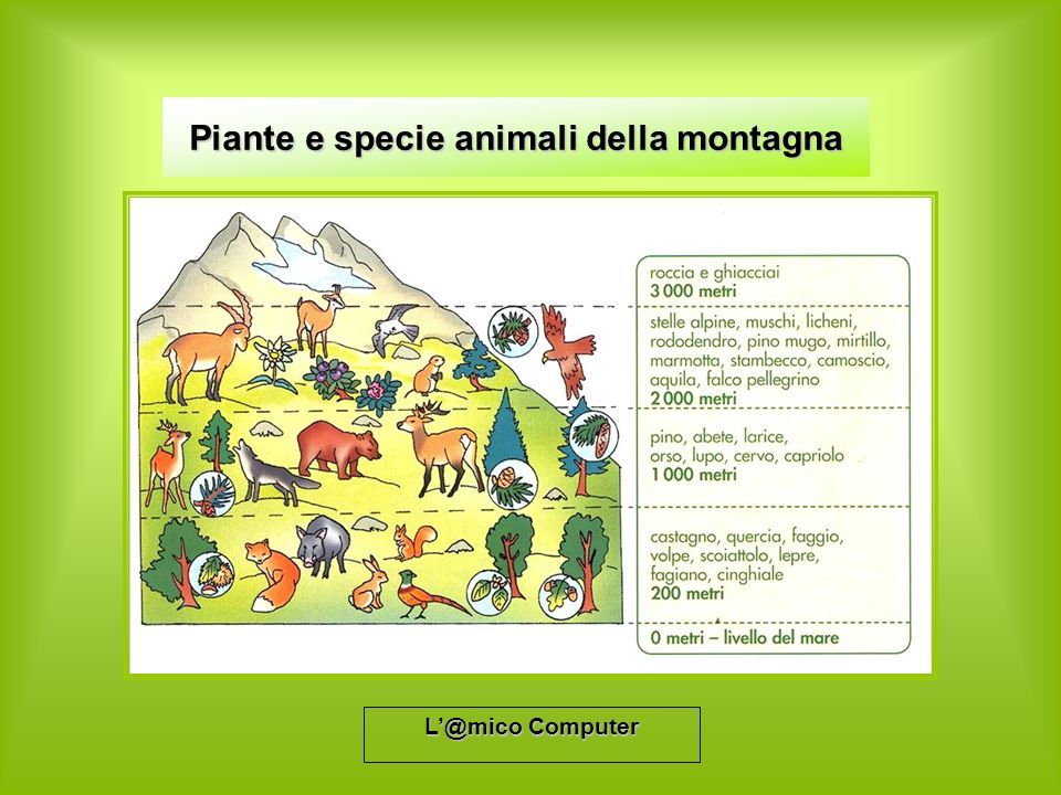 Piante e specie animali della montagna