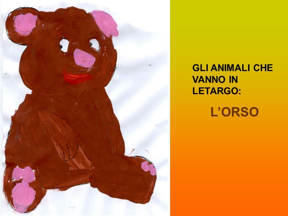 GLI ANIMALI CHE VANNO IN LETARGO: