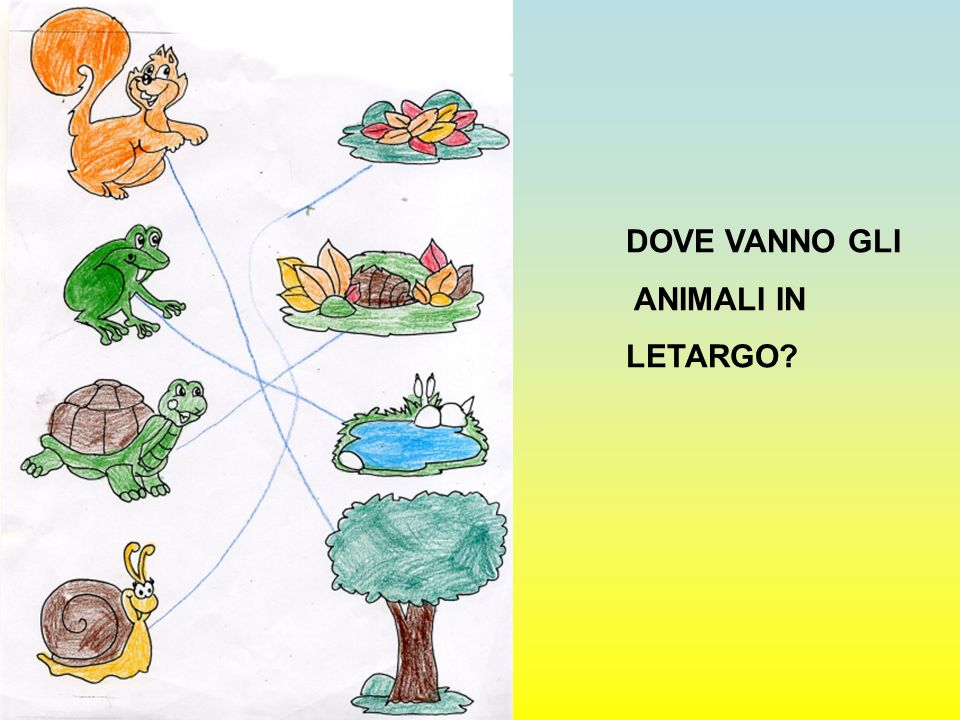 DOVE VANNO GLI ANIMALI IN LETARGO