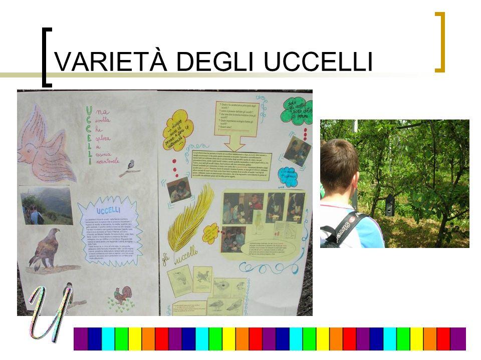 VARIETÀ DEGLI UCCELLI