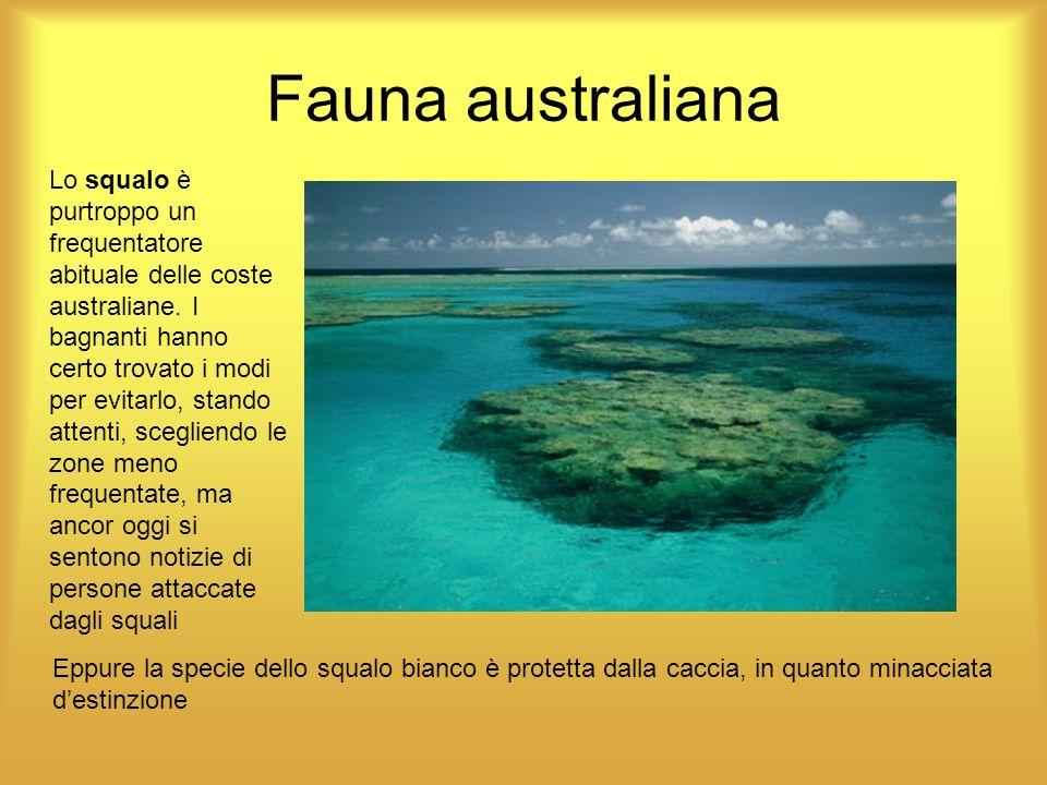 Fauna australiana