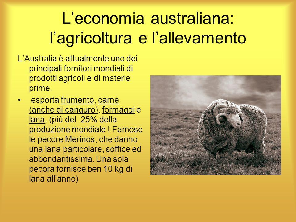 L'economia australiana: l'agricoltura e l'allevamento
