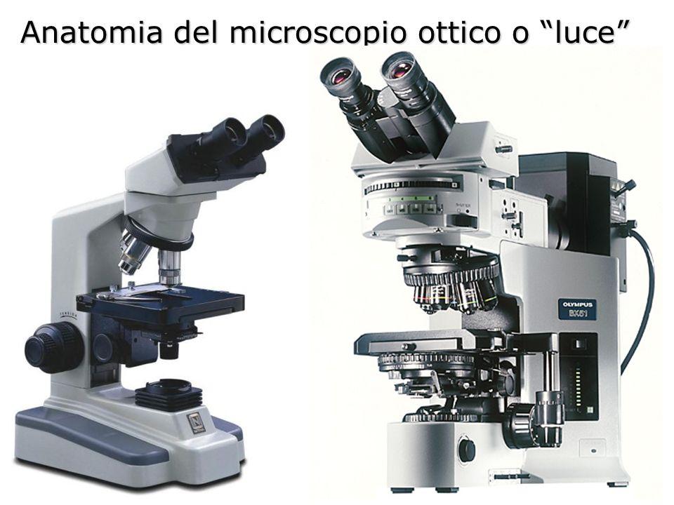 Anatomia del microscopio ottico o luce