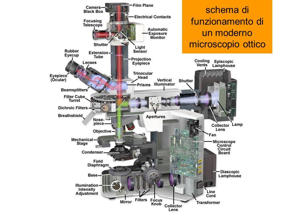 schema di funzionamento di un moderno microscopio ottico