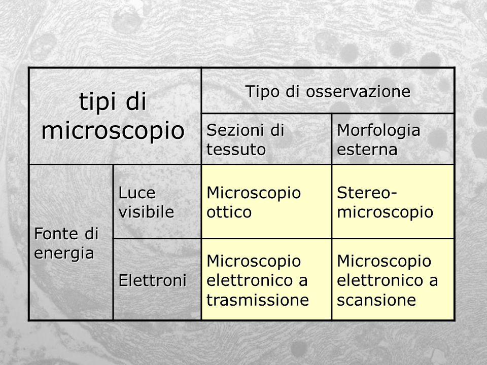 tipi di microscopio Tipo di osservazione Sezioni di tessuto