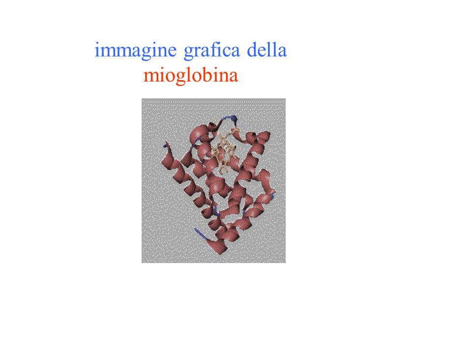 immagine grafica della mioglobina