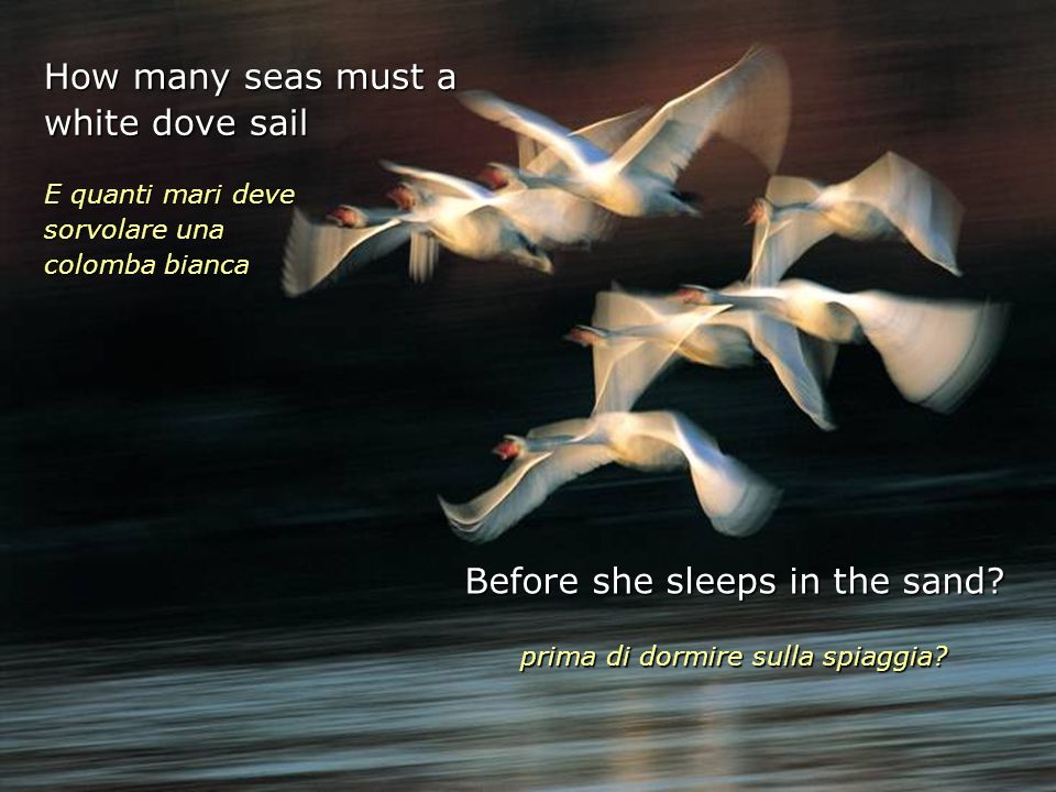How many seas must a white dove sail