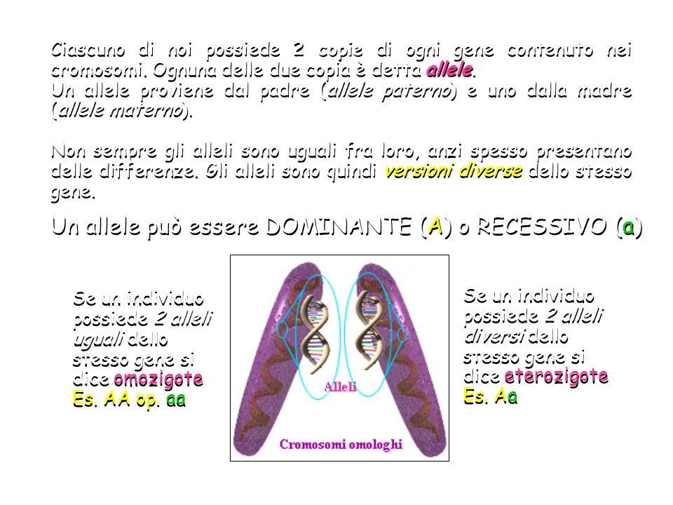 Un allele può essere DOMINANTE (A) o RECESSIVO (a)