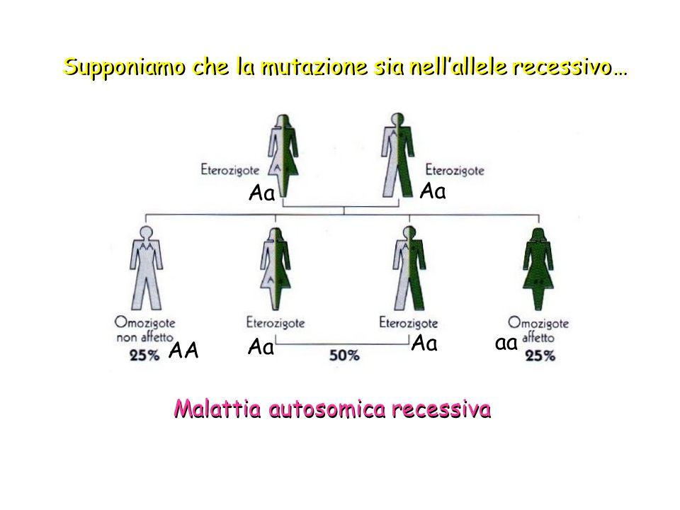 Supponiamo che la mutazione sia nell'allele recessivo…