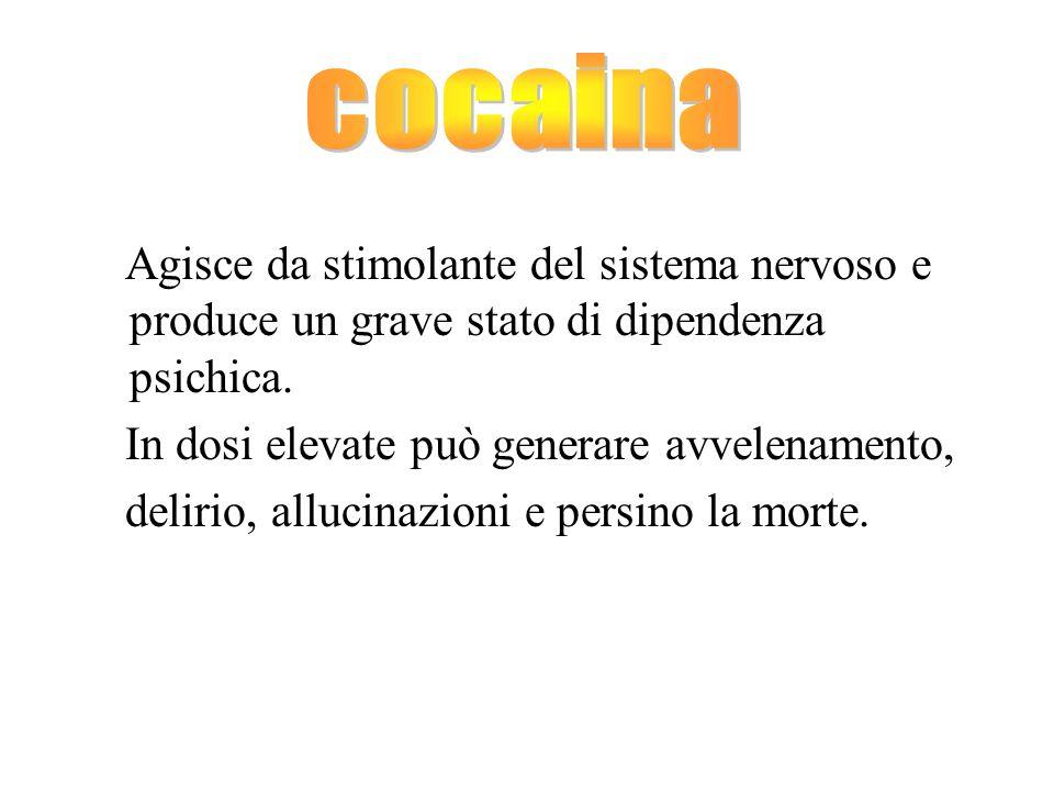 cocaina Agisce da stimolante del sistema nervoso e produce un grave stato di dipendenza psichica. In dosi elevate può generare avvelenamento,