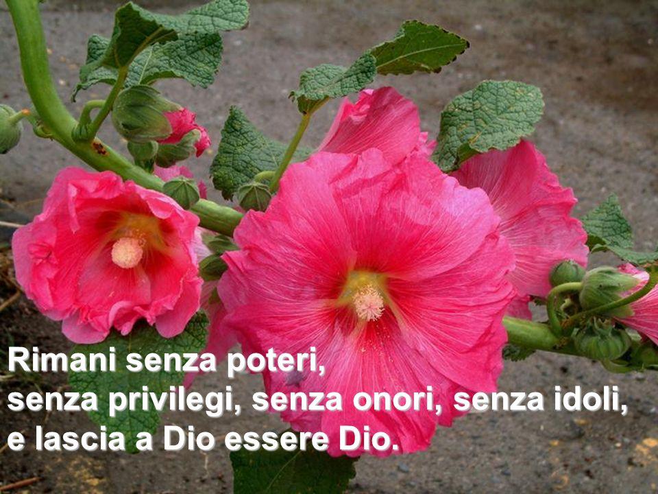 Rimani senza poteri,senza privilegi, senza onori, senza idoli, e lascia a Dio essere Dio.
