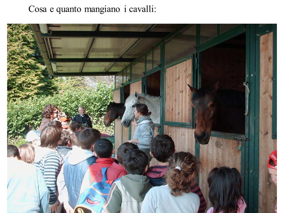 Cosa e quanto mangiano i cavalli: