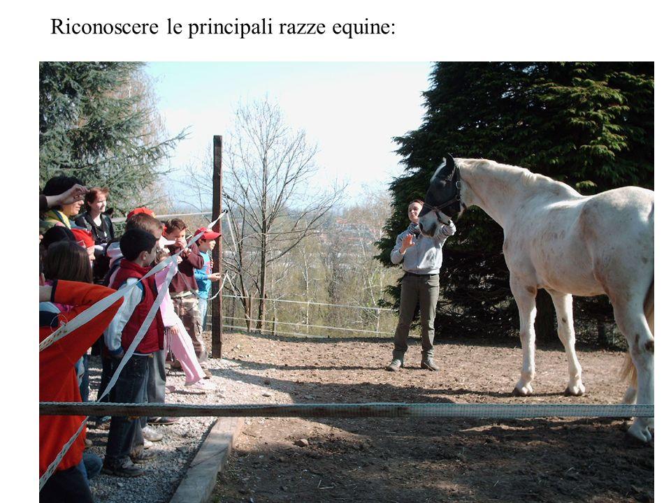 Riconoscere le principali razze equine: