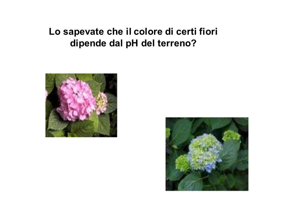 Lo sapevate che il colore di certi fiori dipende dal pH del terreno